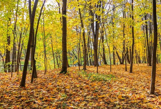 秋の晴れた日に湖のほとりの公園で落ち葉