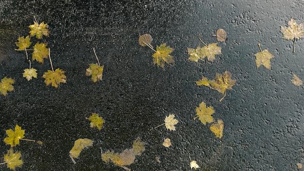 Опавшие желтые листья на мокром асфальте после дождя. осенний фон вид сверху.