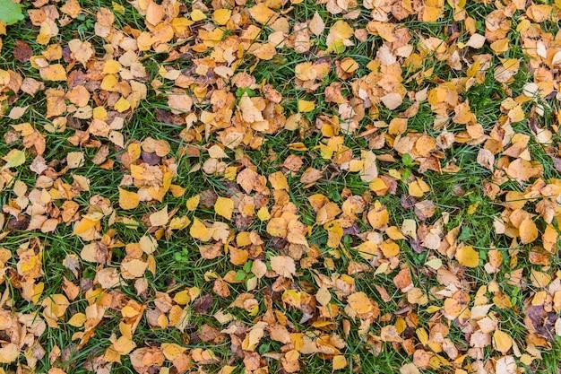 Опавшие желтые листья над травой