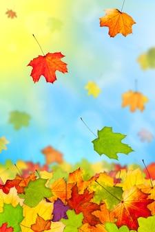 青い空を背景に落ちてくる色とりどりの紅葉