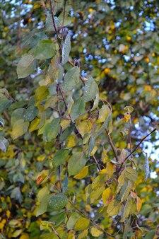 Падающая листва на дереве поле первых заморозков