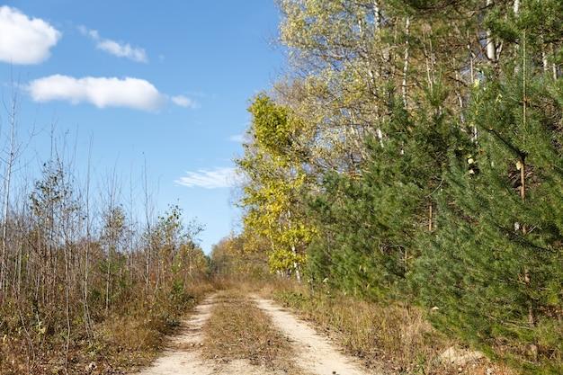 Падающие дубовые листья в живописном осеннем лесу