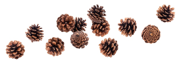 Falling pinecones isolated on white with clipping path