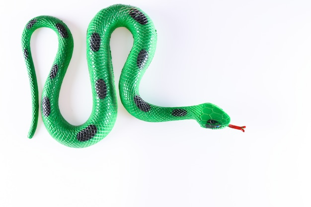 False snake in white background