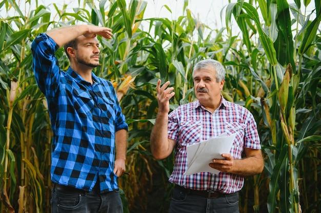 가족 농업, 옥수수 밭에 서서 바라보고 가리키는 농부, 그들은 일몰에 회사를 조사하고 있습니다