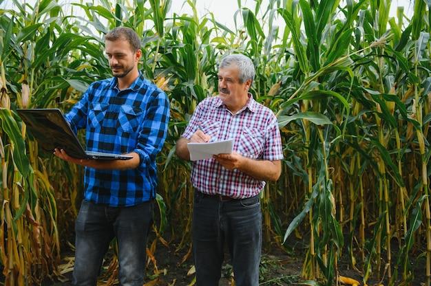 家族の農産物、トウモロコシ畑に立って、目を向けて指さしている農民、彼らは日没時に企業を調べています