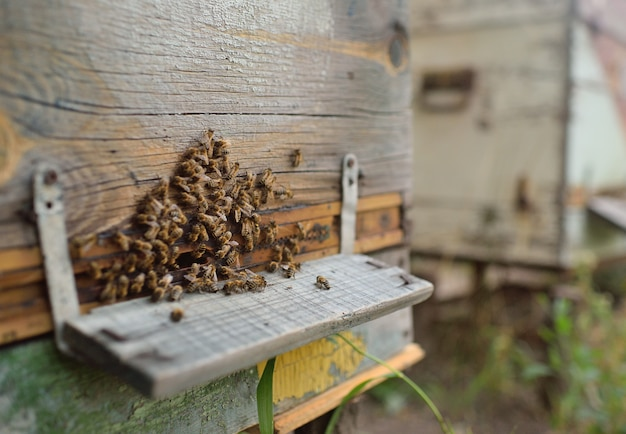 Family bees closeup on wooden background hive
