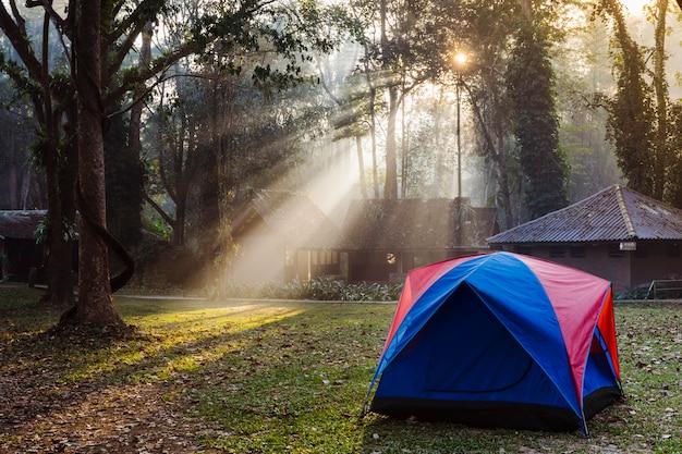 숲에서 가족 캠핑 텐트입니다. 캠핑 방갈로와 태국 국립 공원입니다. 높은 나무 사이의 멋진 아침 빛. 아시아의 자연, 트레킹 및 관광