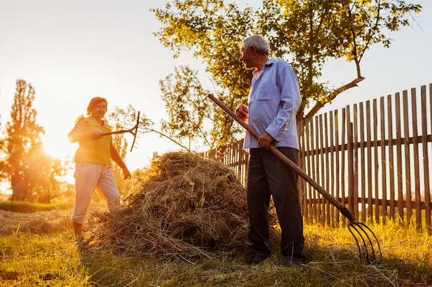 Family couple of farmers gather hay with pitchfork at sunset in countryside.