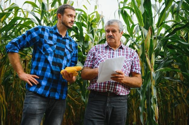 가족 농업. 농부 아버지와 아들은 옥수수 밭에서 일합니다. 농업 개념입니다.