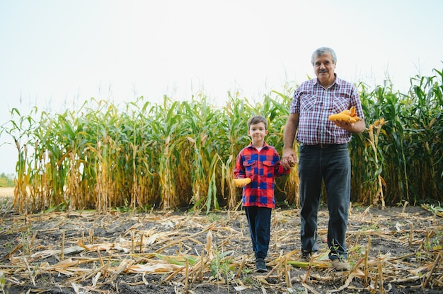 가족 농업. 옥수수 밭에 작은 손자와 농부 할아버지. 경험 많은 할아버지는 손자에게 식물 성장의 본질을 설명합니다.