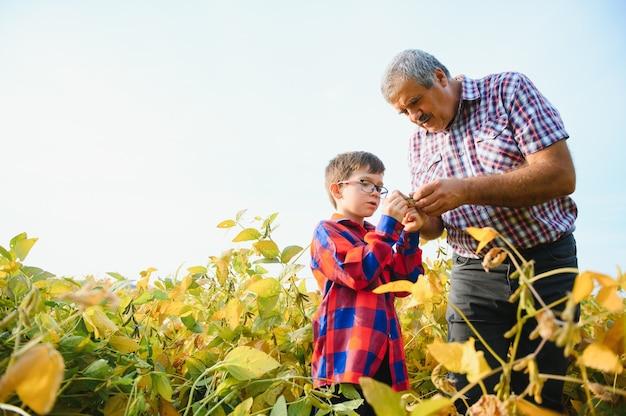 家族農業。大豆畑に小さな孫を持つ農民の祖父。祖父は孫の家業を教えています。