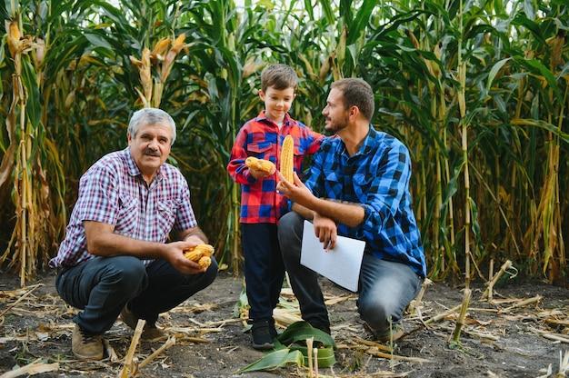 Семейное фермерство. дед фермеров с сыном и молодым внуком на кукурузном поле. концепция сельского хозяйства.