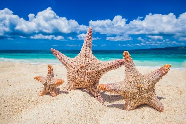 Концепция семейного отдыха - морские звезды гуляют по песчаному пляжу против волн
