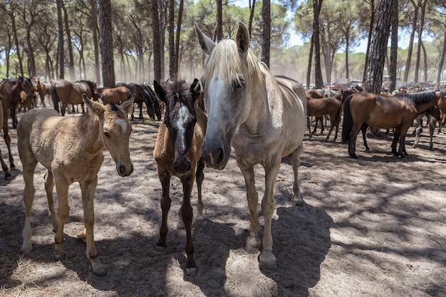 Family of horses communicate in the corral.