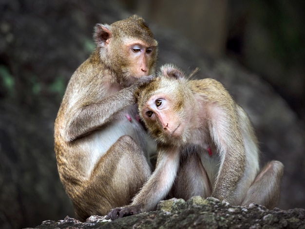 Family of monkeys in the forest