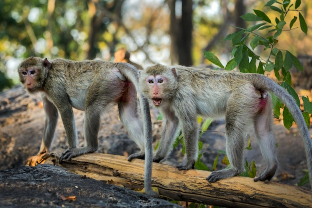 The family of monkeys in the natural atmosphere.
