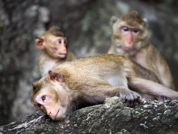 Family of monkeys in the wild.