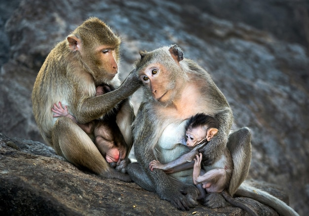 The family of monkeys in the wild.