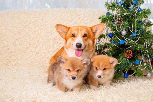 家のクリスマスのクリスマスツリーの近くの犬の母と子犬の家族