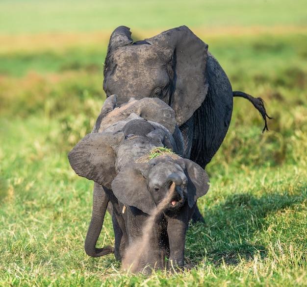 サバンナの象の家族は写真家に直接行きます。