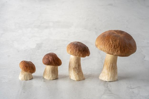 コンクリートの台所のテーブルの上の森のキノコの家族。