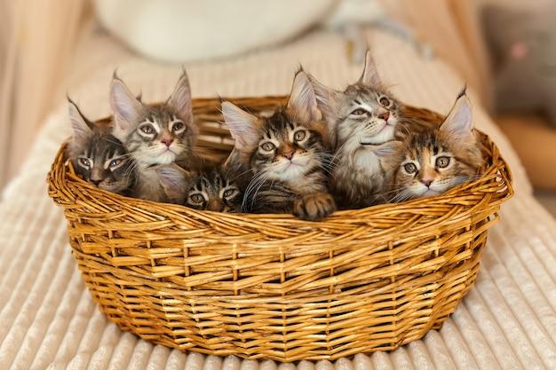 暗い表面の自分のバスケットに6匹の子猫の家族