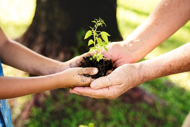 Family planting a new tree for the future