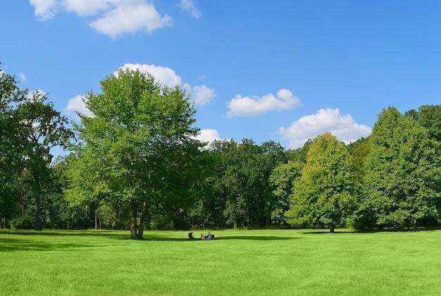큰 나무 아래 공원에서 휴식하는 가족