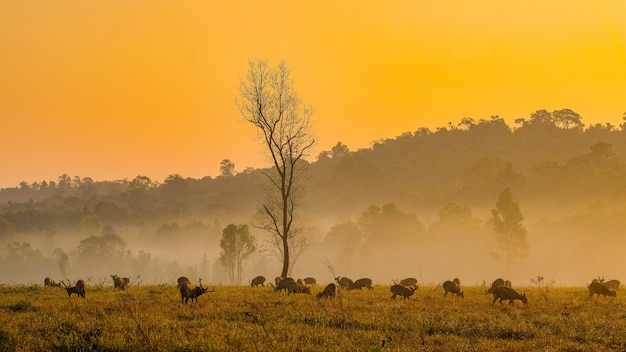 Family sunset deer at thung kraang chaiyaphum province, thailand