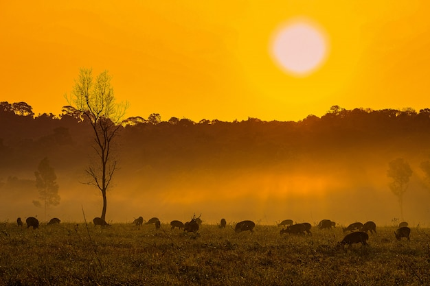 Family sunset deer at thung kramang chaiyaphum province, thailand