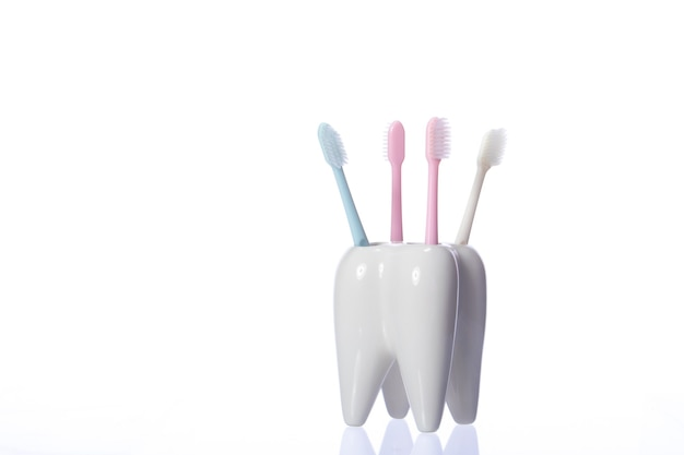 Family toothbrushes in ceramic tooth shaped holder