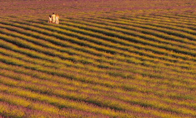 Family walking among lavender fields. family concept