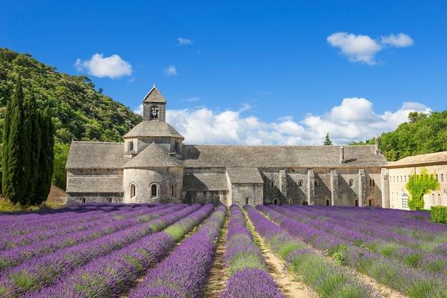 Famosa abbazia di senanque e fiori di lavanda. francia.