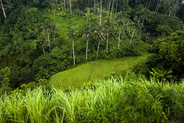 Famous campuhan ridge walk with tropical view and palm trees in ubud, bali, indonesia