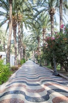 알리 칸테의 유명한 대리석 보행자 골목은 야자수, 스페인으로 둥글게됩니다.