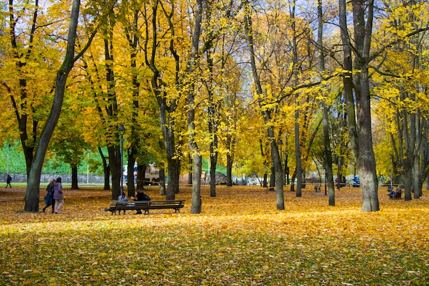 Famous park in city center of vilnius, autumn and fall trees and leaves. lithuania