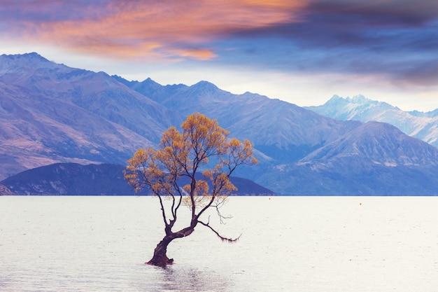 ニュージーランドのワナカ湖にある有名なワナカの木。