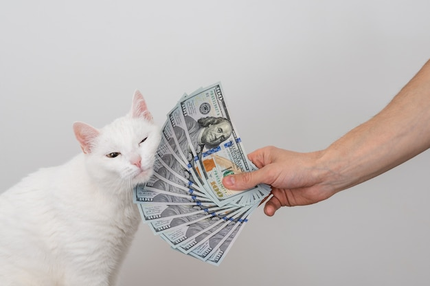 A fan of dollars in a mans hand, a lot of money and white cat