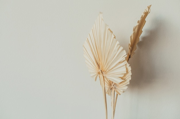 Fan leaves made of craft paper on white