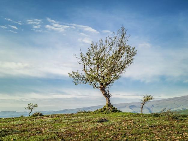 岩の上に生えている派手な木。高地の牧草地。
