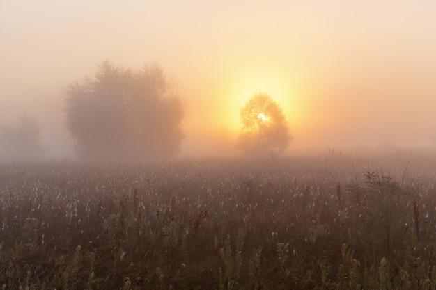 태양 아래 신선한 푸른 풀이 있는 환상적인 안개 밭이 나무 d를 두드리고 있습니다.