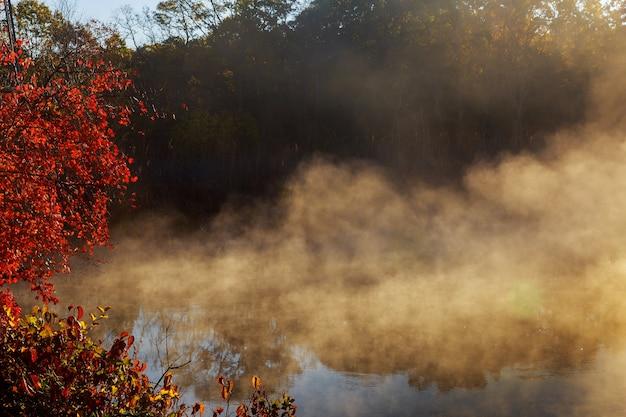 Фантастическая туманная река со свежей зеленой травой на солнце. лучи солнца сквозь дерево. драматические красочные пейзажи. река серет, украина, европа. мир красоты.