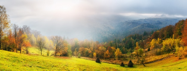Fantastic forest in carpathian ukraine. there comes a golden autumn in the valleys.