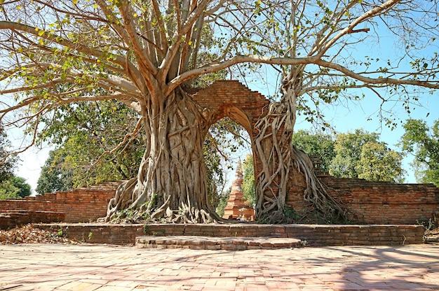 幻想的な「時間の門」、タイ、アユタヤのワットプランガム寺院遺跡への入り口