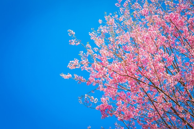 Fantastic pink tree with sky background