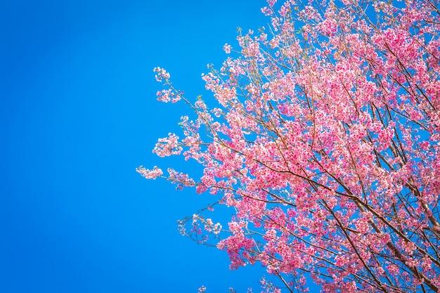 하늘 배경으로 환상적인 핑크 트리