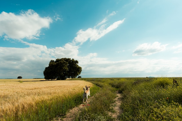 Fantastic spring landscape with one dog