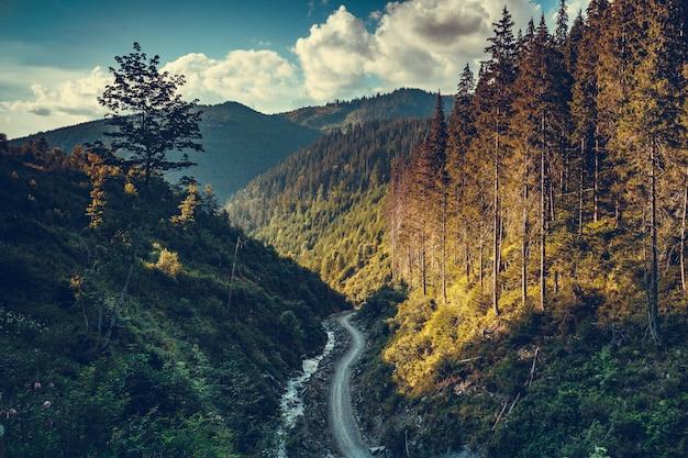 소나무 숲의 산악 도로가 있는 환상적인 일몰 풍경. 여행 배경입니다. 휴일, 하이킹, 스포츠, 레크리에이션. 레트로 빈티지 토닝 효과입니다. 가을 시즌. carpathians, 우크라이나, 유럽