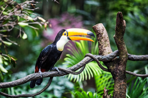 Fantastic toucan on a branch